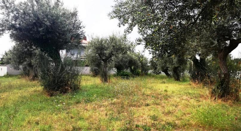 V1908 - For sale in San Giovanni Teatino Building land + Agricultural land
